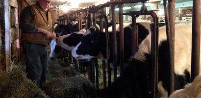 Micii producători de lapte vor fi sprijiniți cu 11 milioane de euro. Care sunt conditiile
