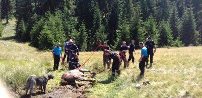 Pompierii din Stei au salvat un cal imobilizat intr-o mlastina in Zona Padis (FOTO)