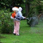 Atentie la parcuri, spatii verzi si maluri de ape. Incepe astazi o noua etapa de dezinsectie in Oradea.