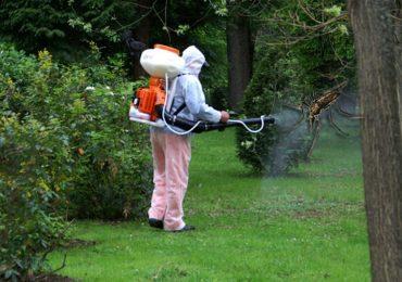 Etapa a II-a a dezinsecţiei și tratamentele fitosanitare, in Oradea