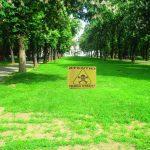 ATENTIE in parcuri! Incep lucrari de deratizare in Oradea