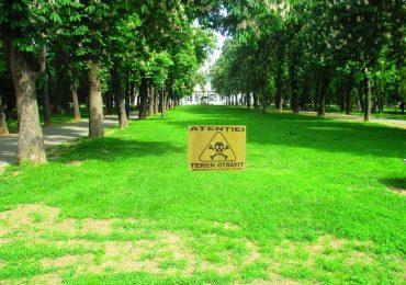 Incep deratizarile in Oradea, in parcuri, scuaruri, maluri de ape si domeniile publice aferente asociatiilor de proprietari