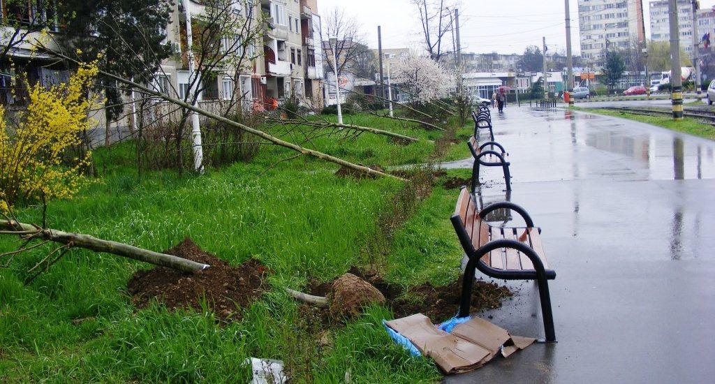 Primaria Oradea va cumpara peste 250 de arbori maturi. Unde vor fi ei plantati