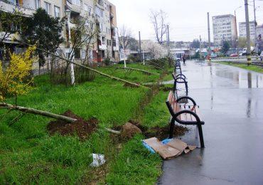Primaria Oradea va planta 3.000 de arbori, in municipiul Oradea, in urmatorii 3 ani