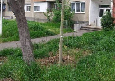 Oradea mai curata! Primaria Oradea a incheiat 821 de protocoale cu Asociatiile de Proprietari pentru ingrijirea codomeniilor