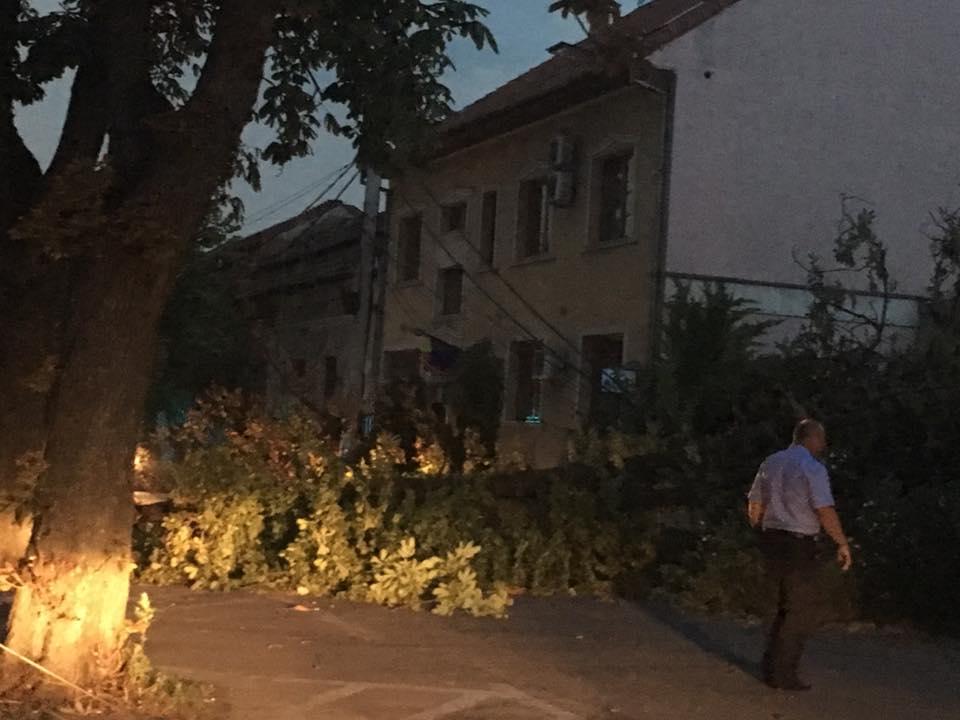 brasovului creanga rupta furtuna Oradea 24 iulie