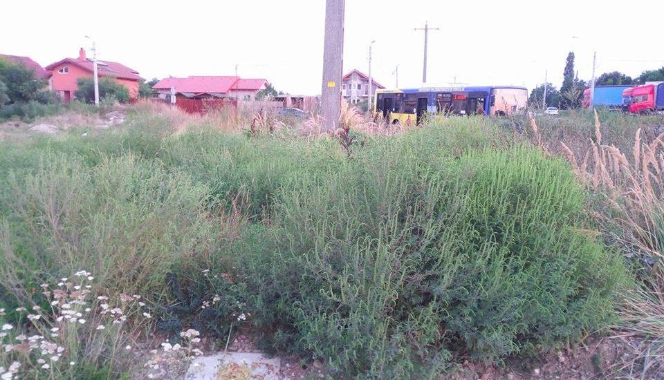 2.500 de lei amenda pentru cei ce nu-si cosesc buruienile din zona spatiilor verzi proprii