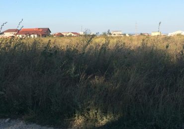 Masuri luate de autoritati pentru eliminarea ambroziei din Oradea