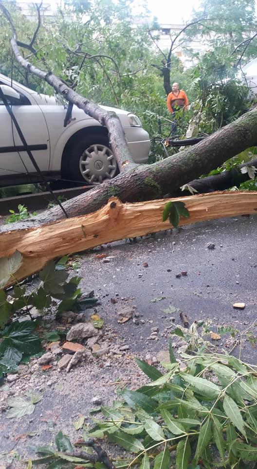Furtuna in Timisoara 5 morti