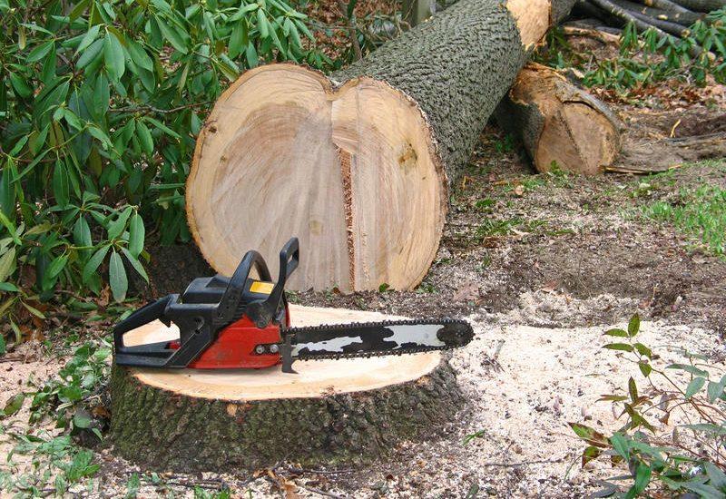 Trei indivizi din Rieni prinsi in flagrant de politistii din Stei, in timp de taiau ilegal 34 de copaci