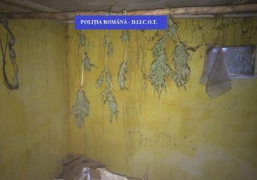 Retea de trafic de droguri, destructurata de politistii bihoreni (GALERIE FOTO)