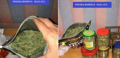 Bihorean prins cu aproape un kg de cannabis. Acesta cultiva si fabrica drogurile la domiciliu (FOTO)