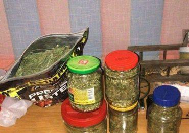 BCCO ORADEA Cannabis
