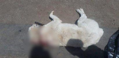 Un bihorean s-a ales cu dosar penal, dupa ce a impuscat mortal, cu sange rece, un caine