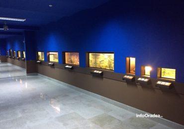 Ce putem vizita la Muzeul Tarii Crisurilor in saptamana 31 august – 6 septembrie