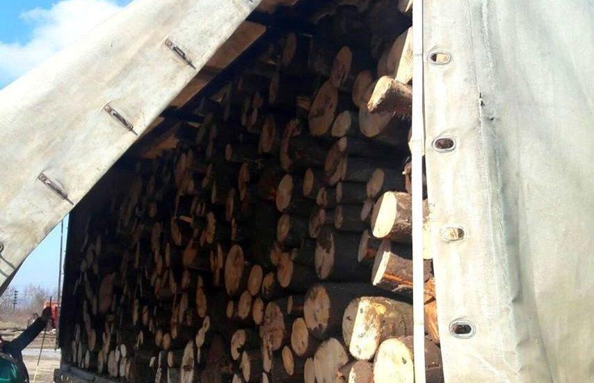 Peste 1.000 de mc de lemne, fara acte legale, confiscate de politistii bihoreni de la doua societati bihorene