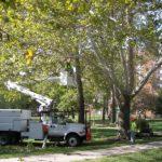 Comisie consultativa pentru toaletarea unor arbori din municipiul Oradea