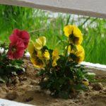 """Oradea implicata. Grupul """"Oradea Suntem Noi"""" lanseaza """"Faleza Florilor 2.0!"""