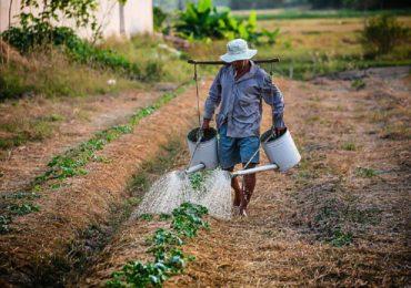 AJOFM Bihor: Locuri de munca in Spania, la cules de fructe