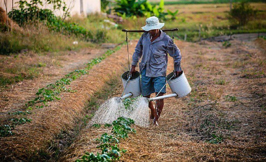 Cornel Popa: In agricultura se inregistreaza un deficit de forta de munca