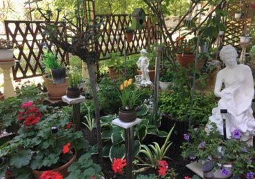 Amenajare flori si scara bloc Nufarul Oradea Penes Curcanul (
