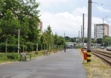 Arbori plantati Oradea mai 2018