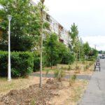 Oradea verde. 400 de arbori vor fi plantati pe 31 de strazi din Oradea. Primii 50 au fost deja plantati pe strada Balogh István