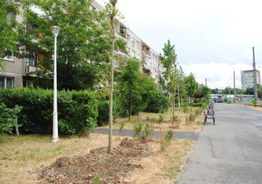 Au fost plantati 272 de arbori in Oradea, in cadrul campaniei de primavara (FOTO)