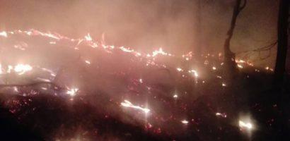 Incendii puternice in Muntii Padurea Craiului. Au ars zeci de hectare de litiera de padure (FOTO)