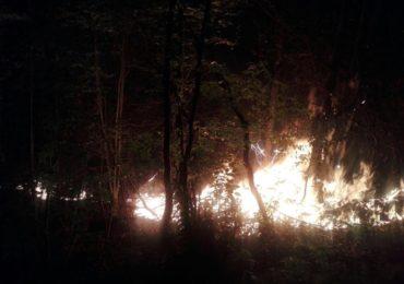 incendiu litiera padure Bihor