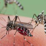 Atentie la tantari! Locuitorii din judetul Bihor pot fi expusi riscului infectarii cu virusul West Nile