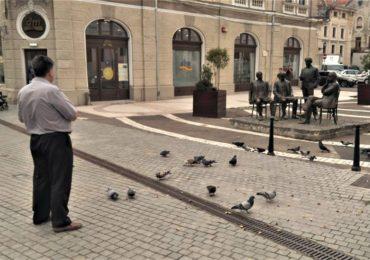 Primaria Oradea: Nu hraniti pisicile si porumbeii de pe domeniul public, riscati amenzi