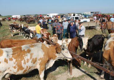 Prefectura Bihor: Incepand cu 11.07.2018 se inchid toate targurile de animale din judet