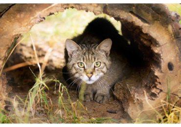 pisici salbatice zoo oradea