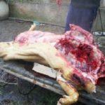 Atentie de unde cumparati carnea de porc