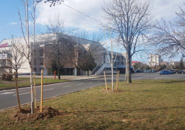 Primaria a plantat 300 de arbori in toata Oradea. In urmatorii 2 ani vor fi plantati 2100 de arbori in tot orasul