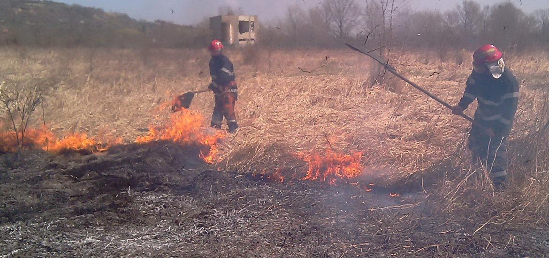 ATENTIE! Inchisoare pentru cei care dau foc miristilor si pun in pericol viata animala, umana sau vegetala