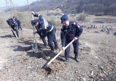 """Cinste lor! Pompierii bihoreni au plantat peste 1800 de puieti de gorun in cadrul proiectului """"Plantăm fapte bune"""""""