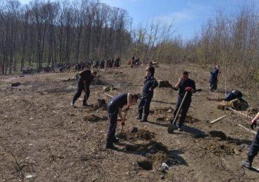 plantam fapte bune pompieri bihoreni (4)