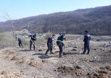 plantam fapte bune pompieri bihoreni (7)