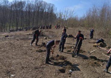 plantam fapte bune pompieri bihoreni (9)
