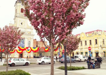 Ciresi japonezi Piata Unirii Oradea (1)