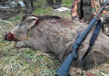 APM Bihor: Amenzi uriase pentru braconaj sau detinerea unui animal salbatic mort