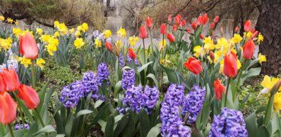 """""""Parcul Lalelelor"""" din Oradea nu va mai exista. Florarul Marius Sabau a decis sa plece din Oradea"""
