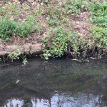 Peta a fost poluata in zona Cantemir, zeci de pesti morti gasiti in albie. ABA Crisuri face investigatii