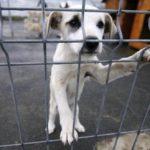 4 aprilie – Ziua Internaţională a Animalelor fără Stăpân. Nu sta pasiv, adopta si tu unul!