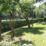 Amenzi mari pentru persoanele fizice si juridice ce nu-si intretin spatiile verzi, in Oradea