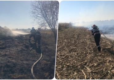Iresponsabili! Incendiu de vegetatie provocat a ars cca. 4 hectare de lanuri de porumb, in Diosig