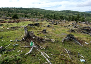 Cornel Popa: Romania pierde cca. 3 hectare de padure pe ora