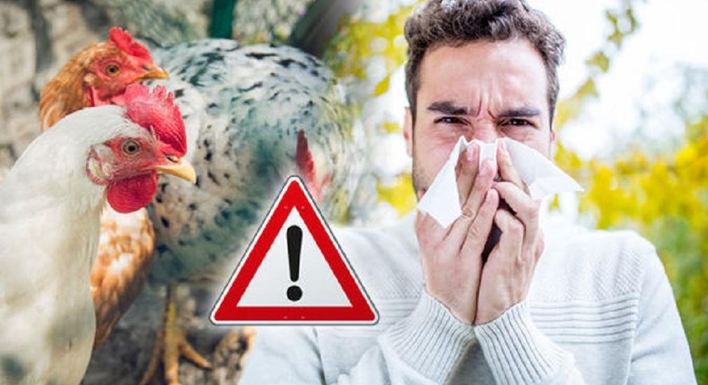 A reaparut Gripa aviara in Romania. Cum o prevenim si ne protejam de ea